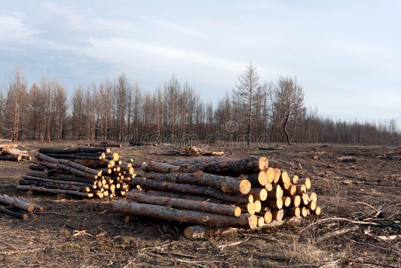 Wylesienie zdjęcia stock