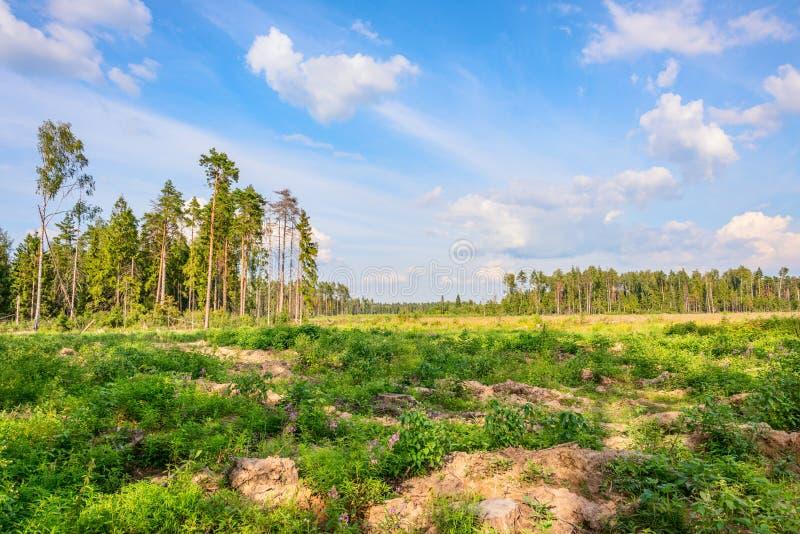 Wylesienie w Balashikha zdjęcia royalty free