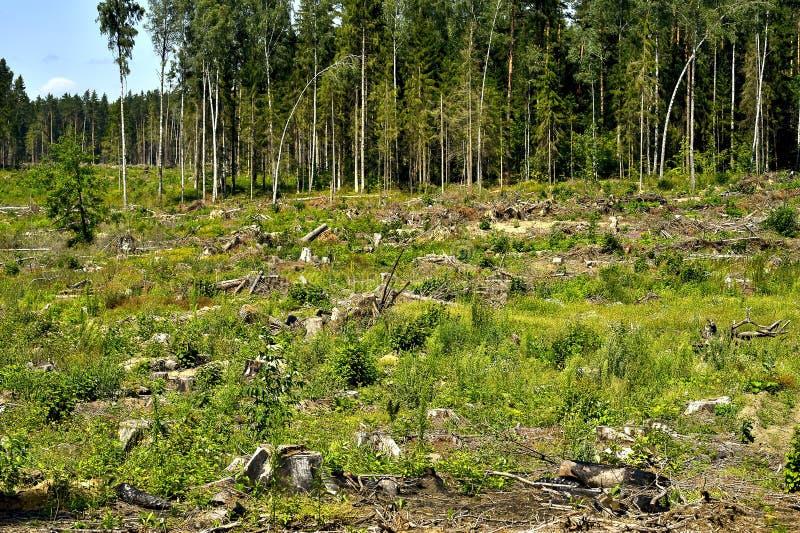 Wylesienie, zbierać surowi materiały dla budowy obraz royalty free