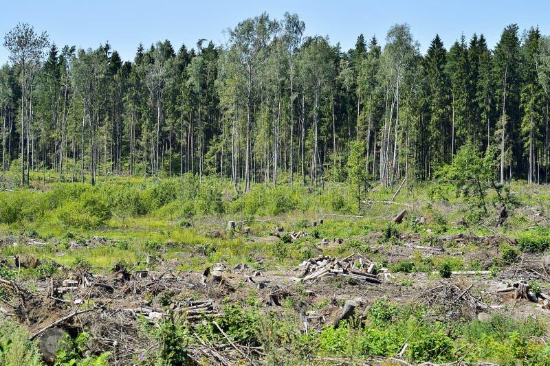 Wylesienie, zbierać surowi materiały dla budowy obrazy royalty free