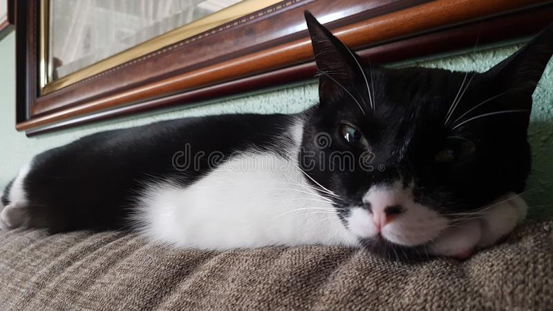 Wyllson de Kat, die een dutje nemen royalty-vrije stock afbeeldingen