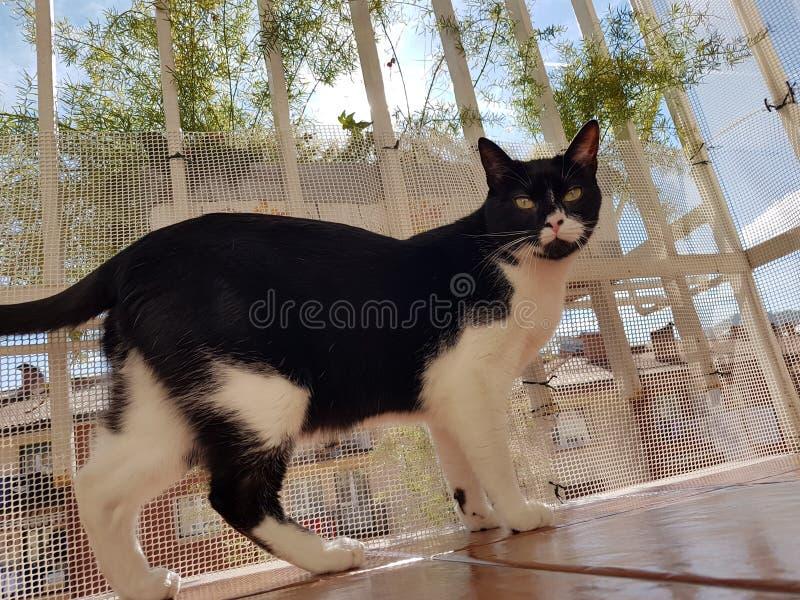 Wyllson katten som precis är lycklig på solen arkivfoton