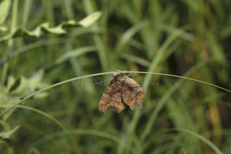 Wymarzony motyl obrazy stock