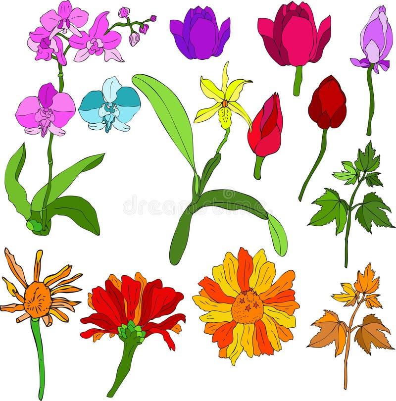 wymieszać kwiat royalty ilustracja