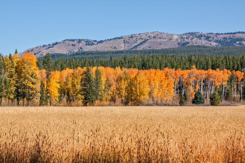 Wyoming berglandskap i nedgång fotografering för bildbyråer