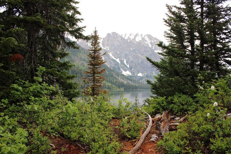 Wyoming Forest Landscape mit See lizenzfreie stockfotos