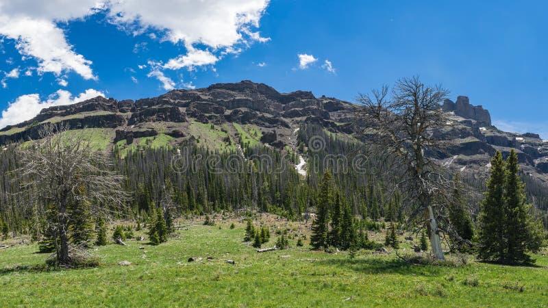 Wyoming Forested berg royaltyfri fotografi