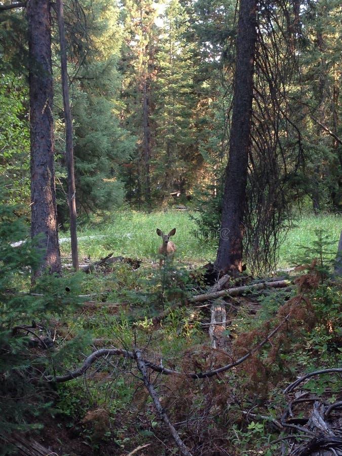 Wyoming Yellowstone royalty-vrije stock foto's