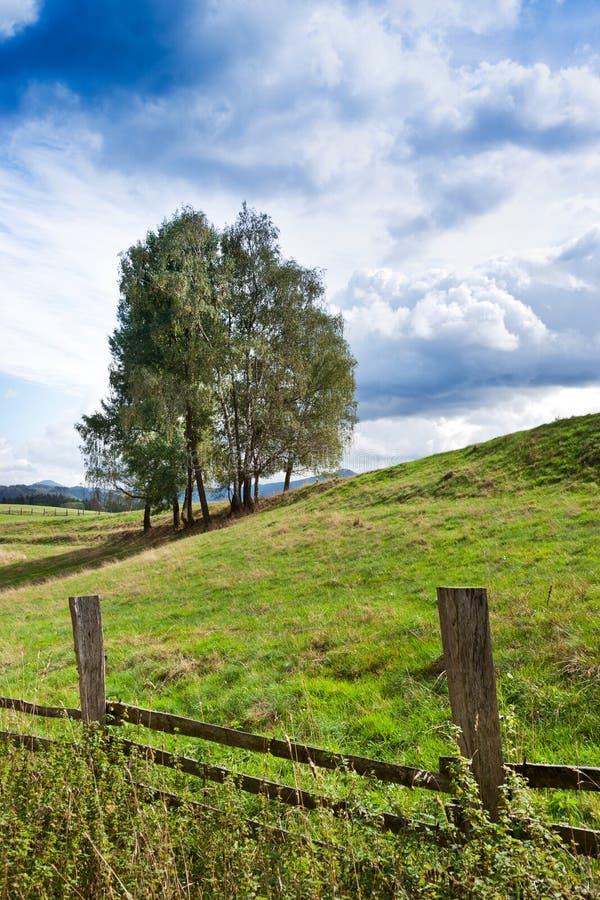 Wypasy i łąki blisko Vysoka Lipa, Jetrichovice region, czech Szwajcaria, republika czech fotografia royalty free