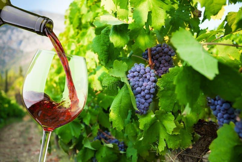 Wypełniać szkło z świetnym winem fotografia stock
