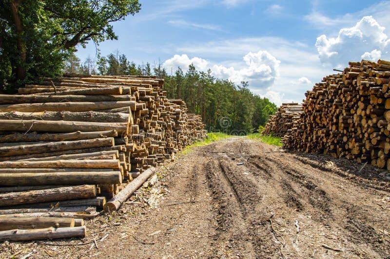Wypiętrzać bele sosny - wylesienie fotografia royalty free