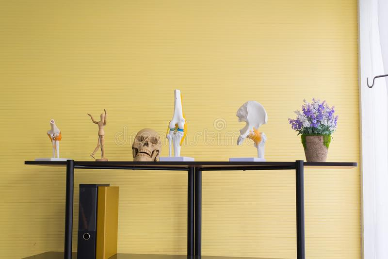 Wyposażenia ciała ludzkiego anatomia zawiera czaszkę, kość, mózg modela dla edukacji badania i medyczną naukę, obrazy stock