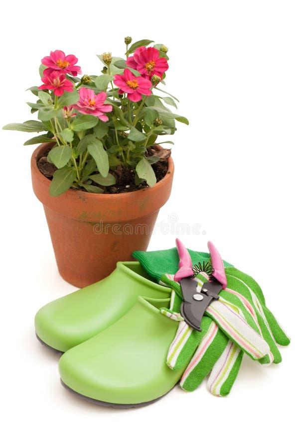 wyposażenia ogrodnictwa doniczkowe cynie obrazy stock