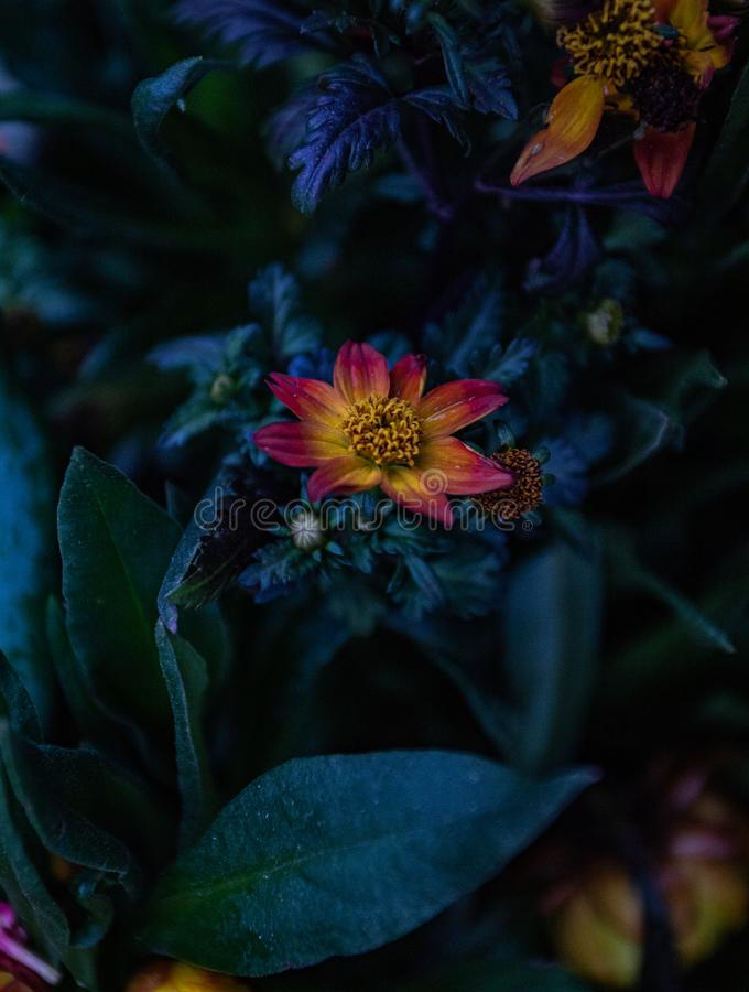 Wyróżniający się kwiat obrazy stock