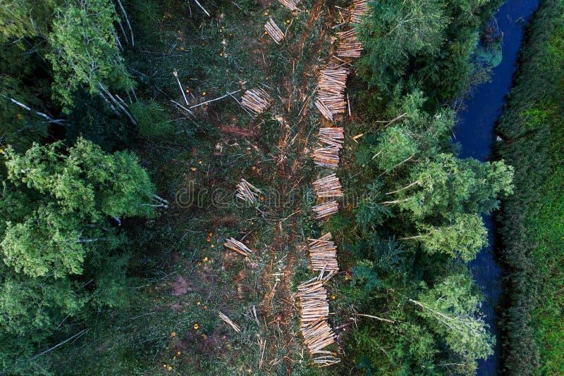 Wyróbek drzewa w lesie obrazy royalty free