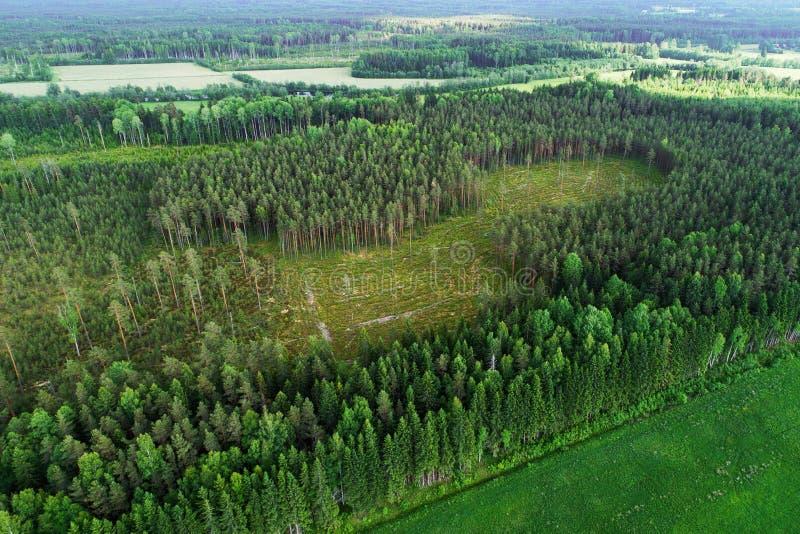 Wyraźny teren w Estonia fotografia royalty free