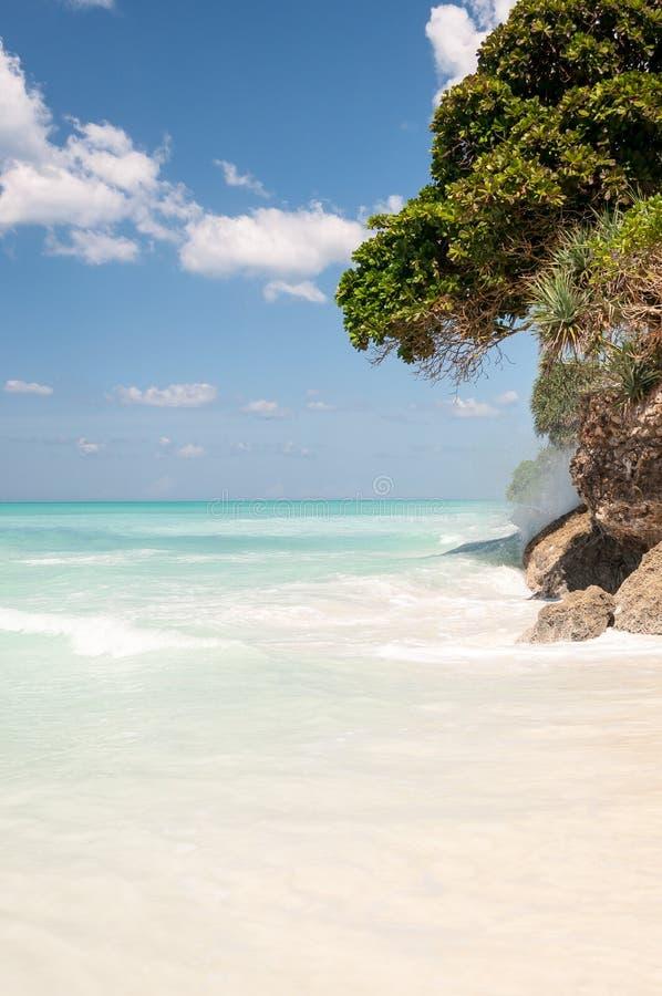 Wyrzucać na brzeg na oceanie, niebieskim niebie i drzewnym dorośnięciu na skale, zdjęcia royalty free