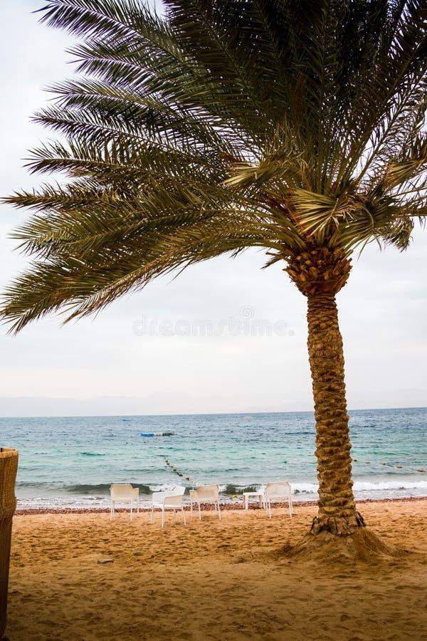 Wyrzucać na brzeg z palmami i parasolami w dniu Wietrznym i chmurnym obrazy stock
