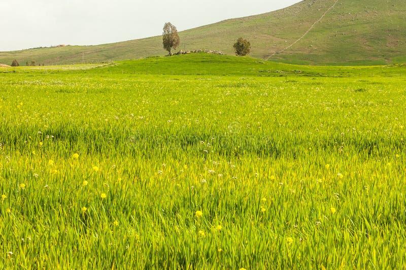 Wysoce szczegółowy zieleni pole z kwitnienie kwiatami zdjęcia stock