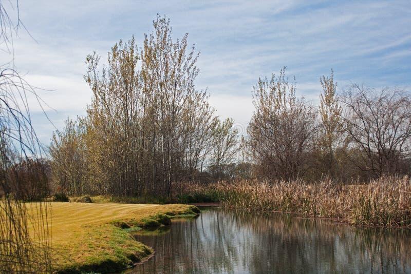 WYSOCY drzewa OBOK wody zdjęcia stock