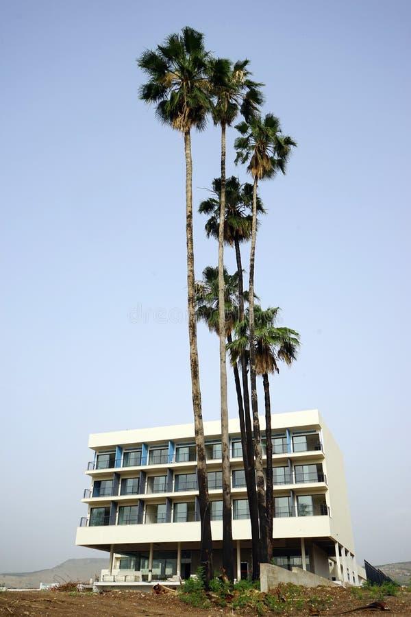 Wysocy drzewka palmowe obraz royalty free