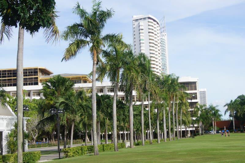 Wysocy drzewka palmowe zdjęcie stock