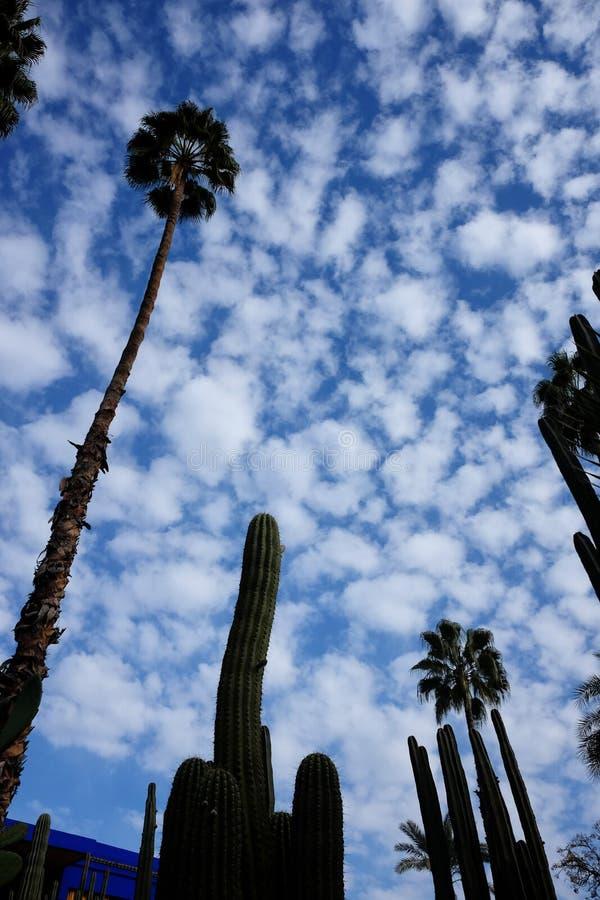 Wysocy drzewka palmowe i kaktusy w Marrakech fotografia royalty free