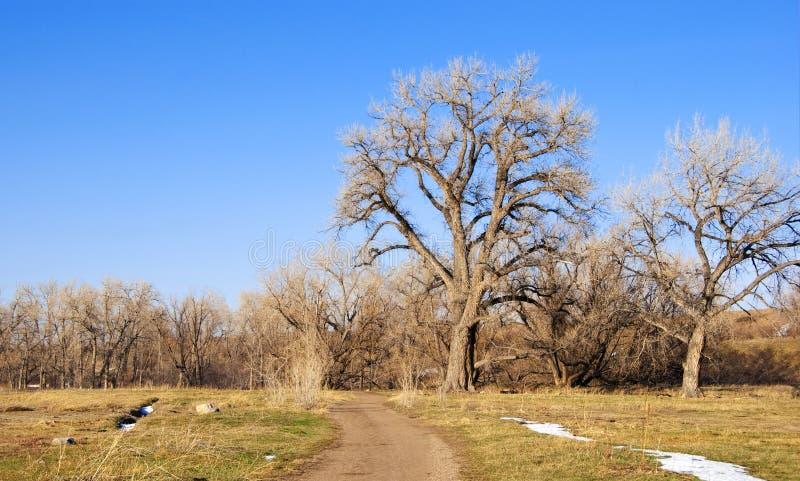 wysoka majestatyczna cottonwoods ścieżka fotografia royalty free
