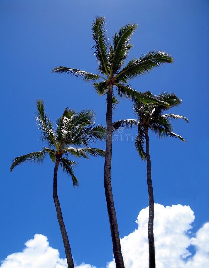 Download Wysoka potrójny obraz stock. Obraz złożonej z hawajczycy - 133575