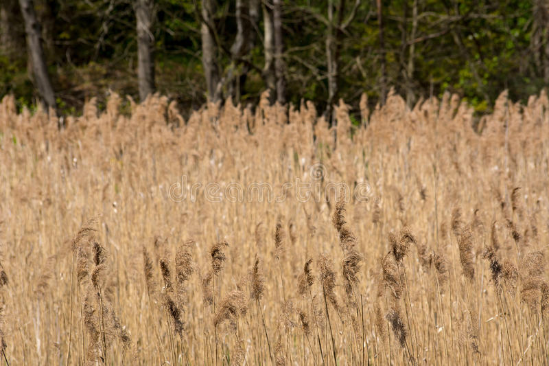 Download Wysoka trawa zdjęcie stock. Obraz złożonej z natura, rośliny - 53791344