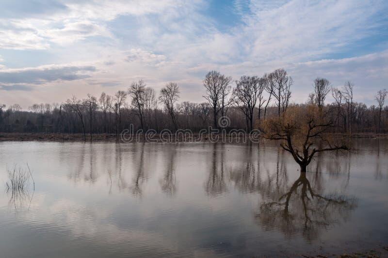 Wysoka woda zrównuje zalewający drzewa i rzeka fotografia stock