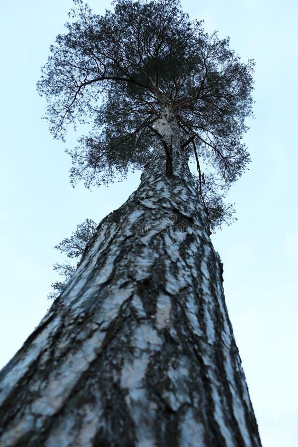Wysoka wzrost roślinność zdjęcie stock