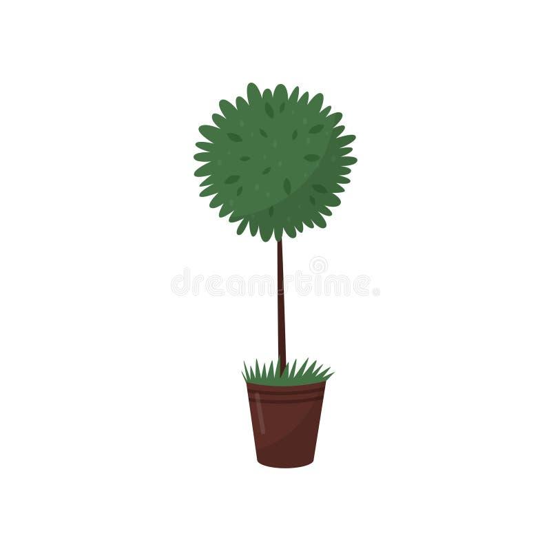 Wysoka zielona roślina w brown garnku Houseplant w ceramicznym flowerpot Płaski wektor dla domowego wystroju lub kwiatu sklepu royalty ilustracja