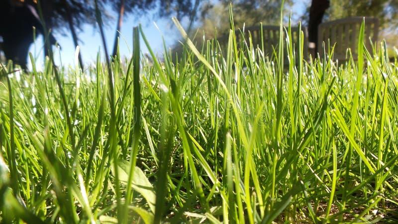 Wysoka zielona trawa fotografia stock