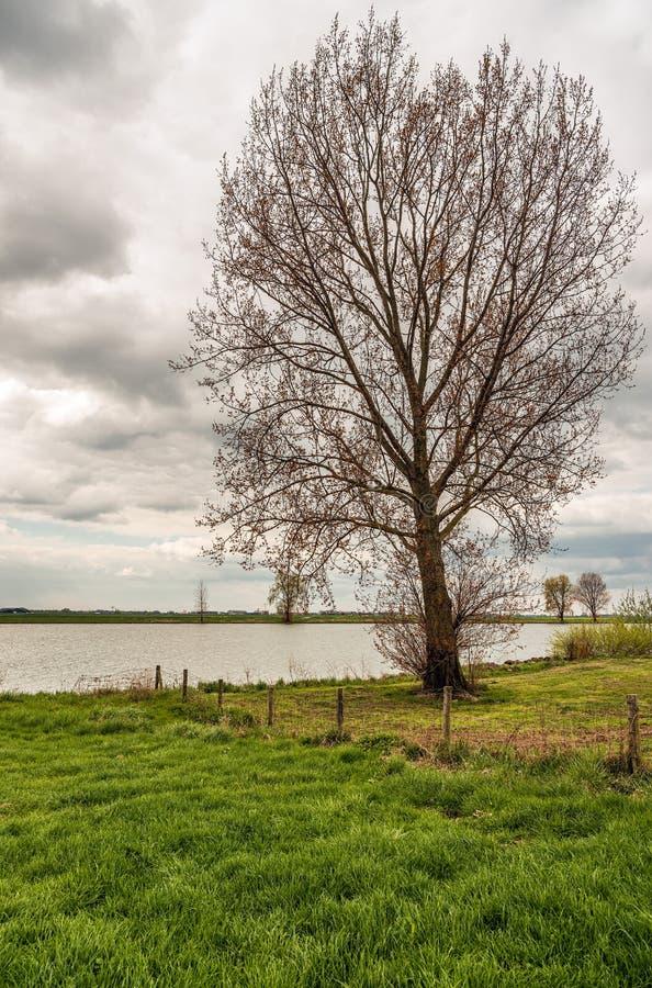 Wysoki drzewo w?a?nie p?czkuje na terenie zalewowy Holenderska rzeka zdjęcie royalty free