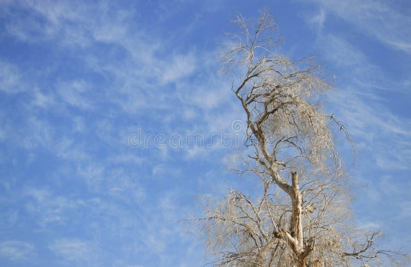 Wysoki drzewo w spadku obraz royalty free