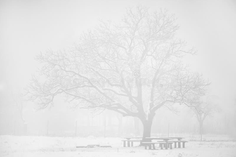 Wysoki kluczowy zima krajobraz obrazy royalty free