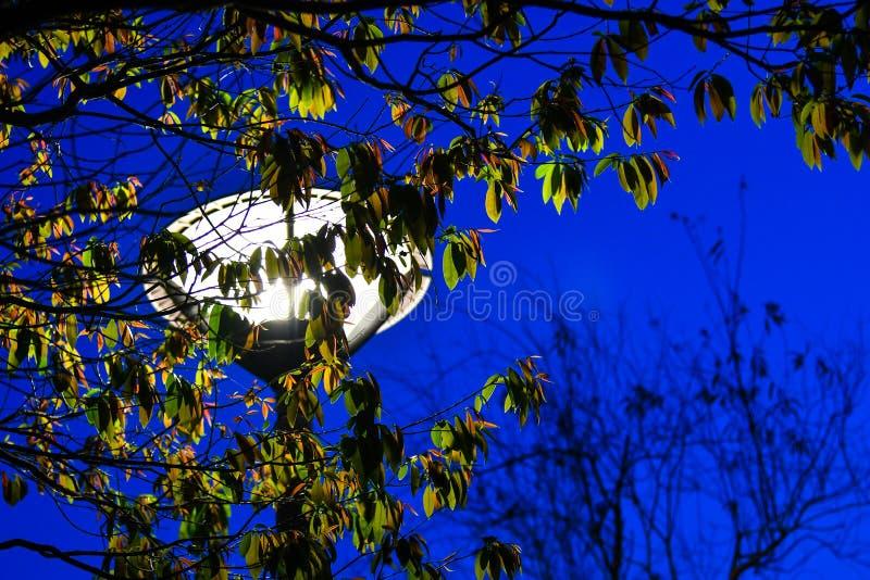 Wysoki słup z światłem przy wierzchołkiem; latarnia uliczna obraz royalty free