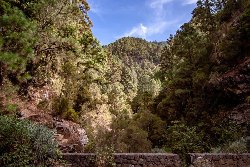 Wysoki widok nad lasem od mostu zdjęcie royalty free