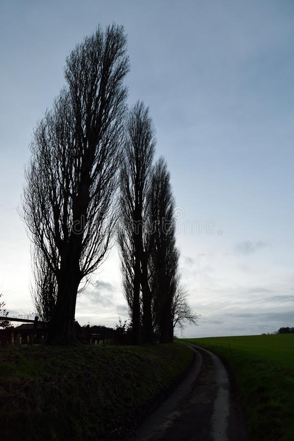 wysokie drzewa fotografia stock