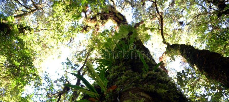 wysokie drzewa obraz royalty free