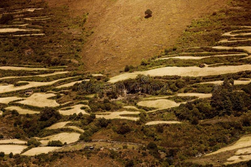 Wysokie góry zakrywać drzewami fotografia royalty free