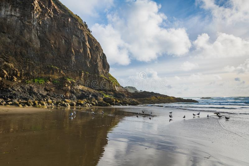 Wysokie, niewygładzone falezy, seagulls, niebieskie niebo i bufiaste białe chmury odbijać w mokrych piaskach plaża wzdłuż Oregon, obrazy royalty free