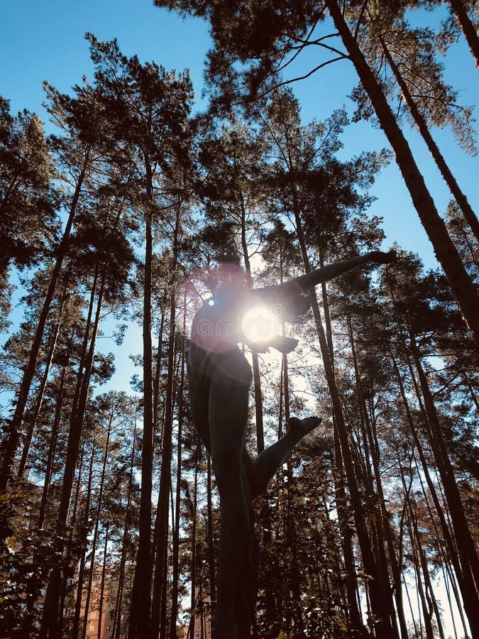 Wysokie sosny & duch zwycięstwo w Irpin, - Ukraina w chwalebnie jesieni świetle słonecznym Kyiv, Kijów - zdjęcie stock