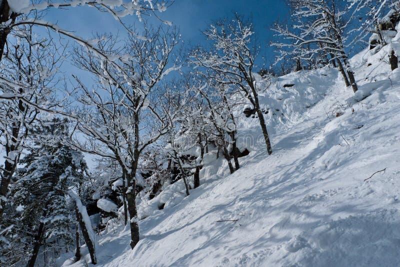 Wysokie strome falezy zakrywać z świeżym śniegiem po niedawnego opad śniegu fotografia royalty free