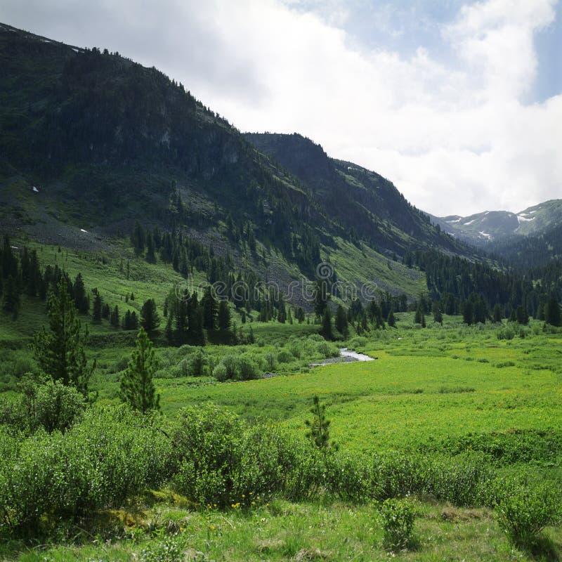 wysokiej góry jest lato widok zdjęcie royalty free
