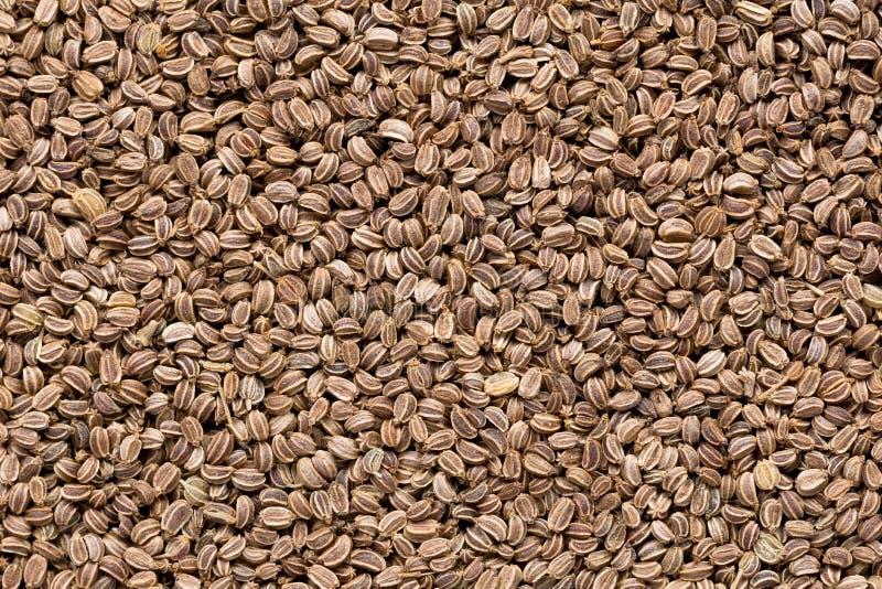 Wysokiej jakości ziarna seler, w tekstury formie dla twój unikalnego ogródu Może używać nasieniodajnymi producentami obrazy stock