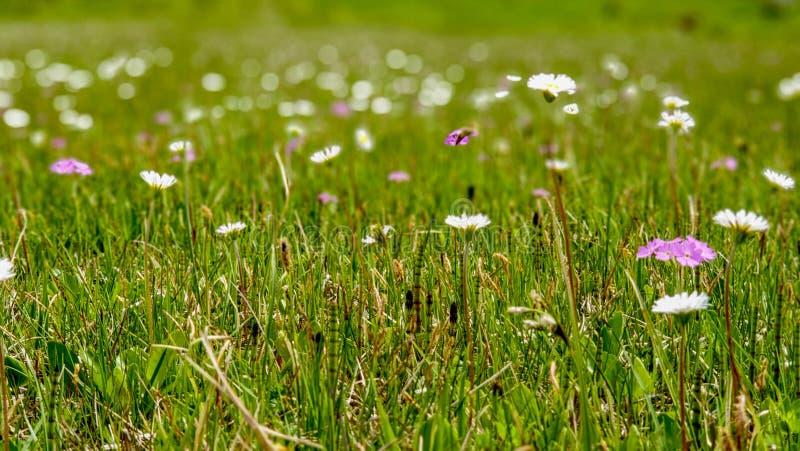 Wysokość cumuje łąkę z wiosna kwiatami w świeżym, oferty zieleń fotografia royalty free