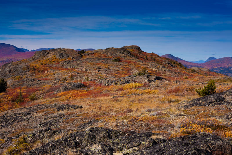 wysokogórska tundra obraz royalty free