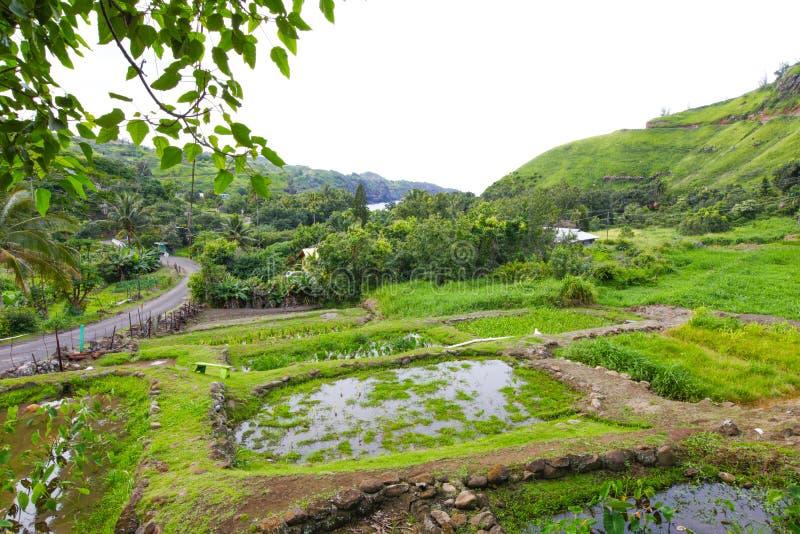 Wyspa Maui Zieleń uprawia ogródek widok hawajczycy fotografia royalty free